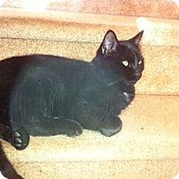 Adopt A Pet :: Mr Black - Piscataway, NJ