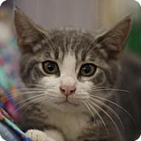Adopt A Pet :: Joel - Sacramento, CA