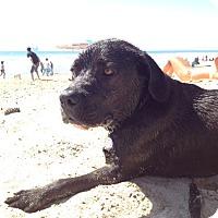 Adopt A Pet :: Lucky- PENDING ADOPTION - Whittier, CA