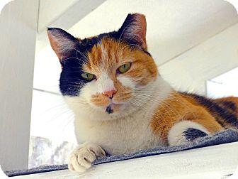 Calico Cat for adoption in Victor, New York - Ella