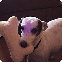 Adopt A Pet :: Josh in Austin area - Argyle, TX