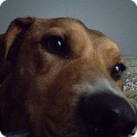 Adopt A Pet :: Otis - Rochester, MN