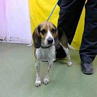 Adopt A Pet :: URGENT on 8/23@DEVORE San Bern - San Bernardino, CA