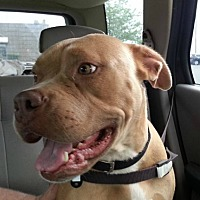 Adopt A Pet :: Diamond - Wenonah, NJ
