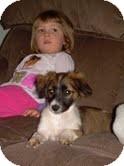 Border Collie Mix Puppy for adoption in Huntsville, Alabama - Clara