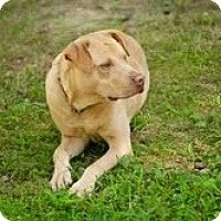 Adopt A Pet :: Bowden - Lewisville, IN