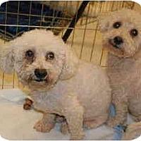 Adopt A Pet :: Pete and Mac - Gilbert, AZ