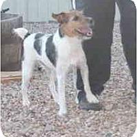 Adopt A Pet :: SANDY - Scottsdale, AZ