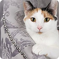 Adopt A Pet :: Dixie - Eagan, MN