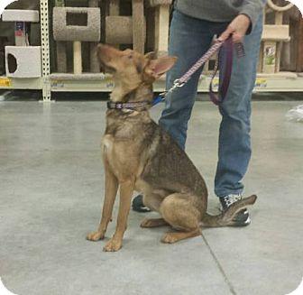 Shepherd (Unknown Type) Mix Dog for adoption in Wilmington, North Carolina - AUTUMN