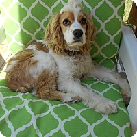 Adopt A Pet :: Poppy/Spike -Adopted! - Kannapolis, NC