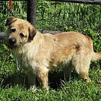 Adopt A Pet :: Chewbacca - Vacaville, CA