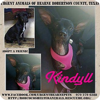 Chihuahua/Dachshund Mix Dog for adoption in Hearne, Texas - Kindyl