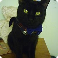Adopt A Pet :: Newmann - Owatonna, MN
