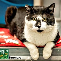 Adopt A Pet :: Fenmore - Oakville, ON