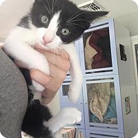 Adopt A Pet :: Ying Yang - Sparta, NJ