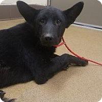 Adopt A Pet :: Kodie #168232 - Apple Valley, CA