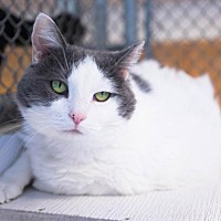 Adopt A Pet :: Lulu - Birdsboro, PA