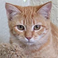 Adopt A Pet :: Radar - Gonzales, TX
