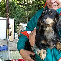 Adopt A Pet :: Spartacus - West Bloomfield, MI