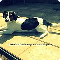 Adopt A Pet :: Snookie - Gadsden, AL