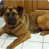 Adopt A Pet :: Sami - New Boston, NH