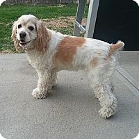 Adopt A Pet :: Molly - Council Bluffs, IA