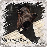Adopt A Pet :: Roxy - Yerington, NV