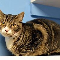 Adopt A Pet :: Mellow 13679 - Atlanta, GA