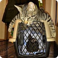 Adopt A Pet :: Mozzy - McDonough, GA
