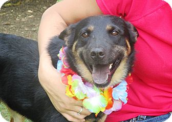 Australian Cattle Dog Mix Dog for adoption in Godley, Texas - Ashleigh