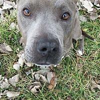 Adopt A Pet :: Easter - Covington, TN
