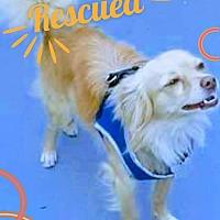 Adopt A Pet :: Tater - San diego, CA