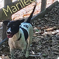 Adopt A Pet :: Marilee - Milton, GA