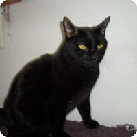 Adopt A Pet :: Max - Montello, WI