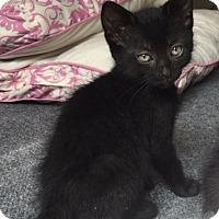 Adopt A Pet :: Mario - Colorado Springs, CO
