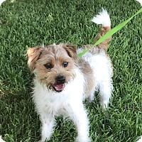 Adopt A Pet :: Duke - San Leon, TX
