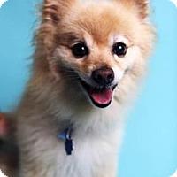 Adopt A Pet :: Xander - Philadelphia, PA