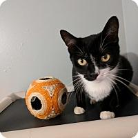Adopt A Pet :: Bella - Concord, NC