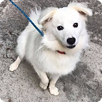 Adopt A Pet :: Brennen - Marietta, GA