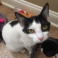 Adopt A Pet :: Athena - Herndon, VA
