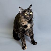 Adopt A Pet :: Felicity - Houston, TX