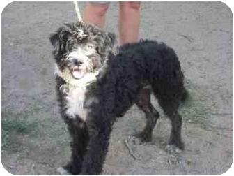 Terrier (Unknown Type, Medium) Mix Dog for adoption in San Fernando Valley, California - Uno