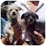 Photo 2 - Chihuahua/Terrier (Unknown Type, Small) Mix Dog for adoption in Spring Valley, California - Zach & Milo