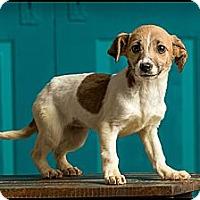 Adopt A Pet :: Miley - Owensboro, KY