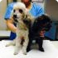 Adopt A Pet :: Ebony and Jak - Shawnee Mission, KS