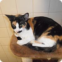 Adopt A Pet :: Joleen - white settlment, TX
