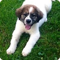 Adopt A Pet :: Queenie - Morgantown, WV