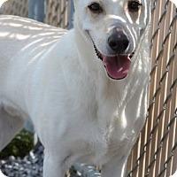 Adopt A Pet :: T.J. - Foster, RI