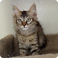 Adopt A Pet :: Spencer - Sacramento, CA